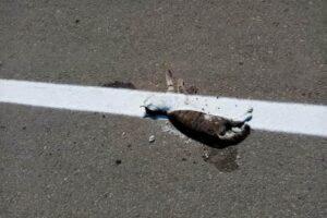 dolj:-marcajul-drumului-trasat-peste-cadavrul-unei-pisici