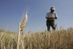 ministrul-agriculturii-a-anuntat-acordarea-de-despagubiri-pentru-agricultorii-afectati-de-seceta