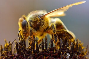 apicultura-este-foarte-importanta-pentru-romania