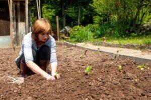 legume-care-se-planteaza-sau-se-seamana-in-luna-august