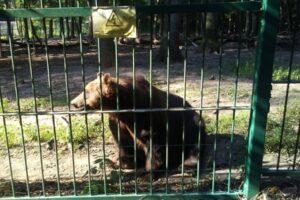 activitate-inedita-pentru-copii-la-zoo-targu-mures