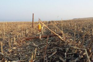 seceta-si-criza-covid-19-au-afectat-serios-agricultura-romaneasca