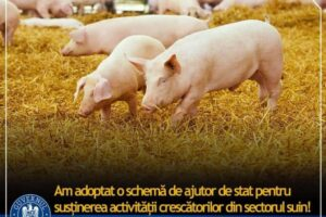crescatorii-de-bovine,-porcine,-pasari-si-albine-vor-primi-sprijin-financiar