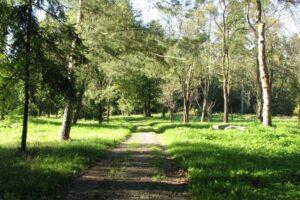 actiune-de-plantare-de-arbori-in-parcul-dendrologic-kronstadt