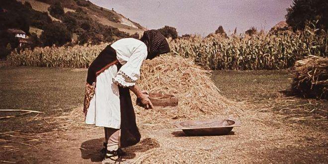 reportaj.-secerisul-manual-si-ritualurile-din-jurul-painii,-pe-cale-de-disparitie