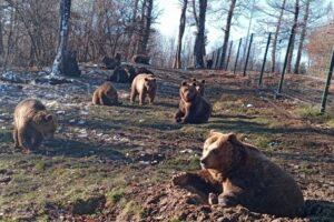 acte-caritabile-pentru-animalele-salbatice