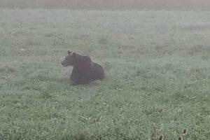 ursoaica-cu-pui-in-parcul-de-la-platoul-cornesti