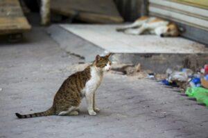 reprezentantii-ong-urilor-pentru-protectia-animalelor-saluta-sprijinul-acordat-de-autoritatile-judetului-mures