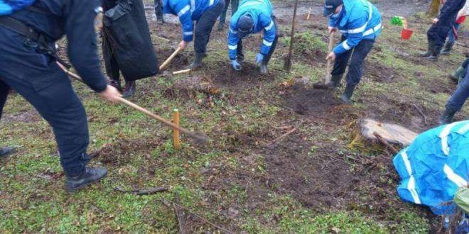 puieti-de-stejar-plantati-de-jandarmii-din-mures