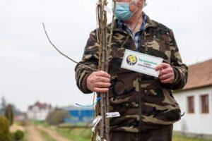 5.000-de-puieti-vor-fi-plantati-la-iesirea-din-sfantu-gheorghe,-prin-proiectul-'poarta-soarelui'