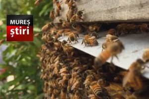 au-invatat-albine-sa-depisteze-infectiile-cu-covid-19!