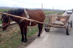 dosar-penal-pentru-ranirea-sau-schingiurea-unui-cal