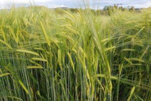 producatorii-agricoli-din-mures-cred-ca-romania-trebuie-sa-reduca-dependenta-de-importuri