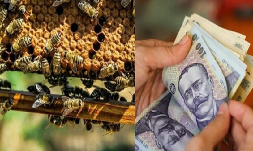 apia-a-efectuat-plati-pentru-circa-7.100-de-beneficiari-ai-programului-national-apicol-2021